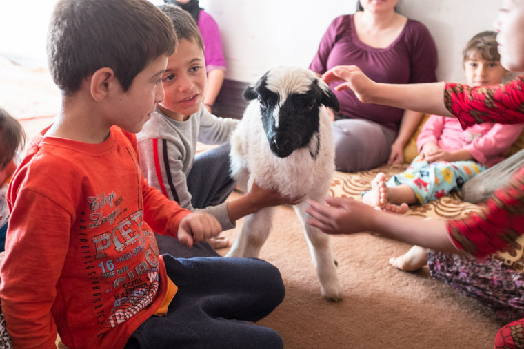 The young kids couldn't wait for use to see the new baby lamb, so they brought the lamb to us inside!